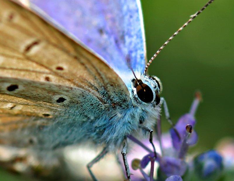130-farfalle_C06p